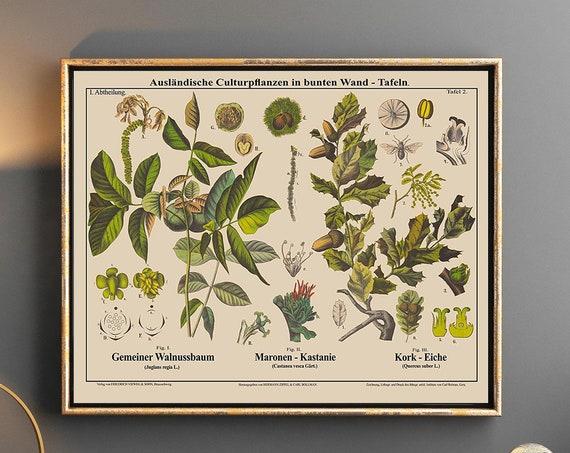 Landscape Botanical Chart Mid Century German School Chart