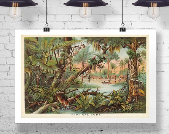 Tropical Prints Plants Wall Art Plant Greenery Climate Poster from 1890's