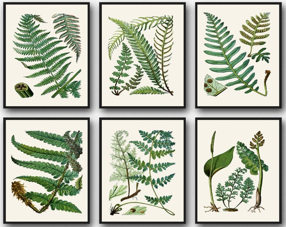 Botanical Fern Print Set of Fern Botanical Illustrations Botanic Wall Art Botanic Prints Botanical Prints Botanical Poster Set Fern Pattern