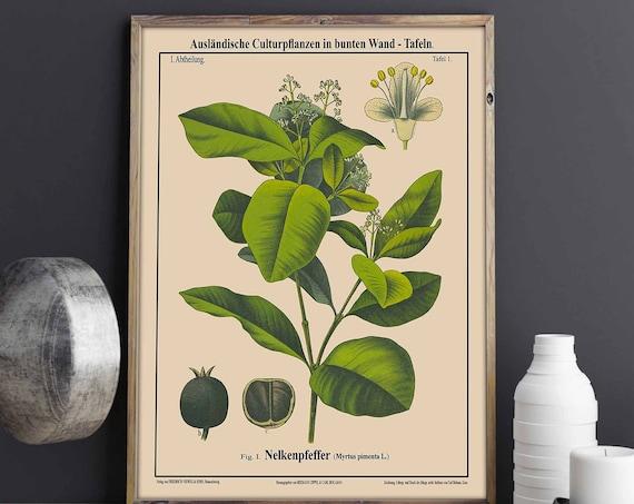 Caribbean Food Print Allspice Botanical Jamaica Pimento Cuisine Art