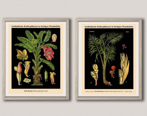 German Botanical Print Set of 2 Botanical Wall Art Prints Botany Decor WB27-36