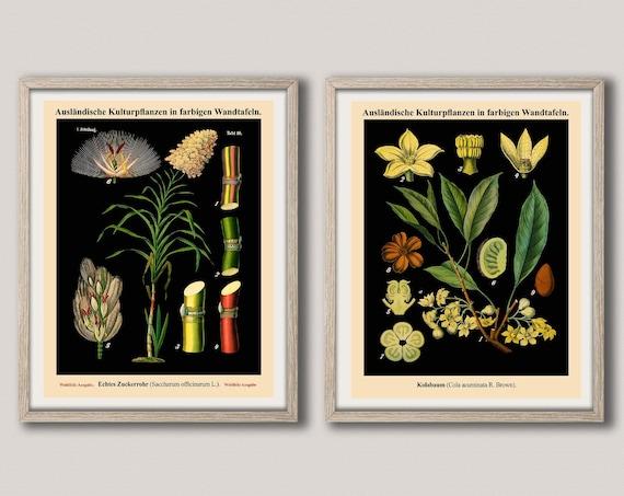 Botanical Wall Art Set of 2 Vintage German School Botanical Charts WBBOT37-38