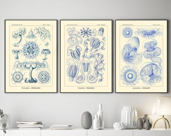 Blue Botanical Illustrations by Ernst Haeckel Blue Nature Decor Set of 3
