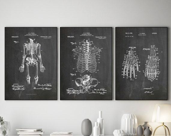 Medical Decor Set of 3 Skeleton Posters Skeleton Medical Diagrams