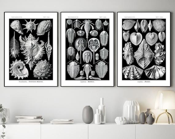 Botanical Art Set of 3 Biological Illustrations Biological Wall Art