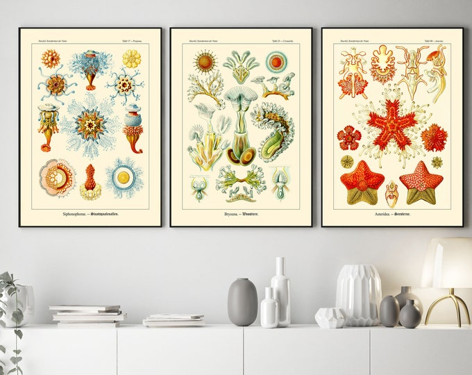 3 Unique Botanical Drawings from Ernst Haeckel Kunstformen Der Natur