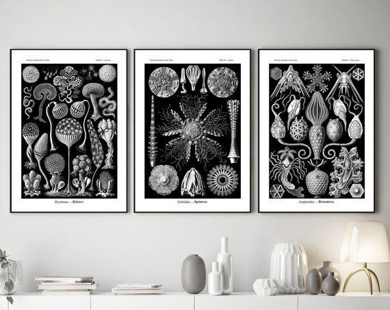 Botanical Art Set of 3 Rare Black and Silver Botanical Posters