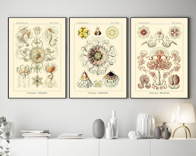 European Botanical Prints from 1900 European Educational Charts Set of 3