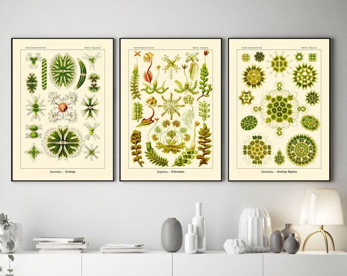 Green Botanical Illustrations Green Decor Set of 3 Green Sea Life Art