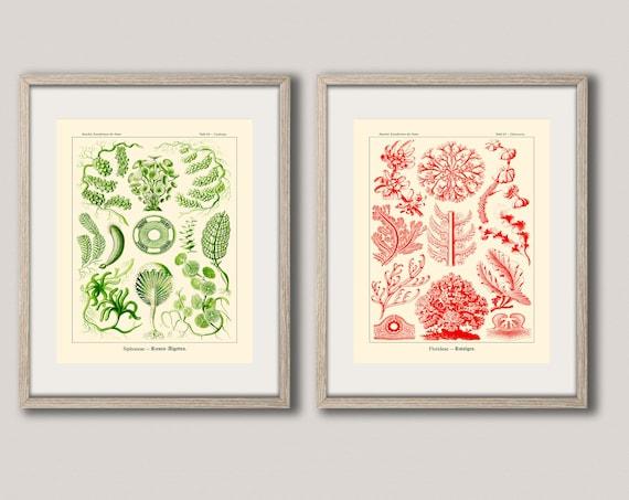 Set of 2 Unique Botanical Posters by Ernst Haeckel Illustrations