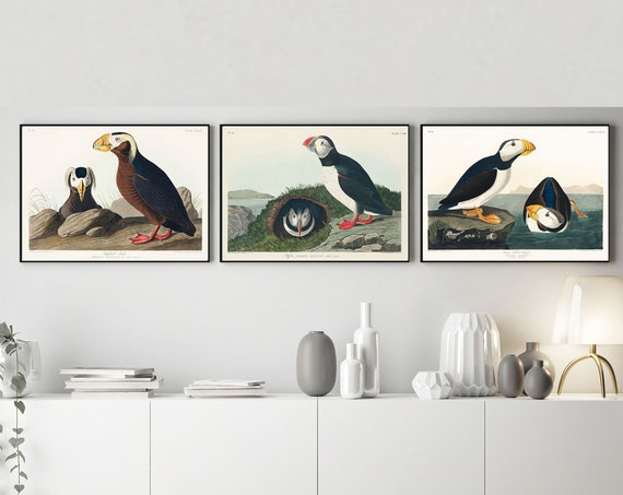 Set of 3 Puffin and Auk Posters Puffin Gift Set of 3 Puffin Prints
