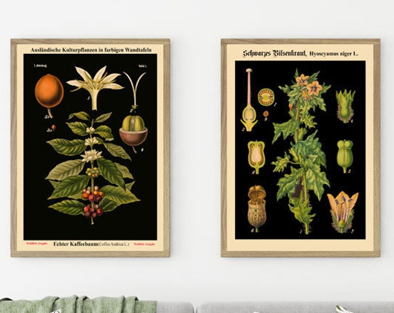 Botanical Print Set of 2 Botanical Poster German Botany Prints Biology Poster Plant Biology Print Educational Chart  WB-BLBOT1-Blot2-2F