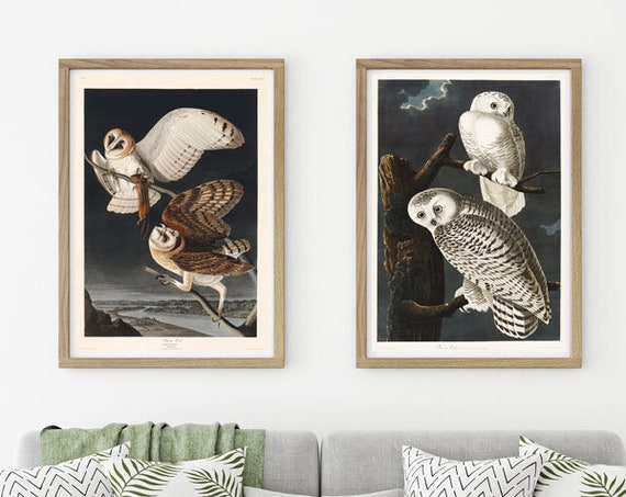 Audubon Prints Set of 2 Audubon Posters Audubon Wall Art Audubon Illustrations Audubon Barn Owls Botanical Sketches Animal Illustrations