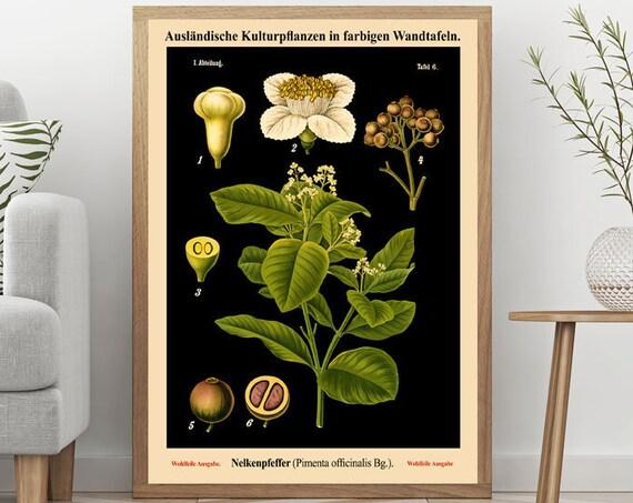 Black Botanical Print Vintage German Botanical Chart Pepper Wall Art Vintage Educational Chart Botanical on Black Art Background WB-BLBOT-3