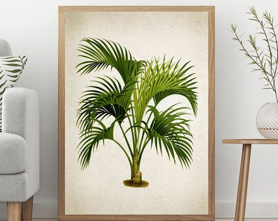 Palm Tree Print Large Botanical Print Large Vintage Poster of Palm Tree Illustration Botanical Illustration Wall Art WBOT28