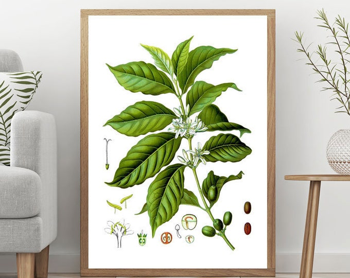Coffee Plant Botanical Illustration Cafe Decor Coffee Wall Art Coffee Prints Coffee Art Coffee Poster Cafe Poster Coffee Lover Gift WBOT124