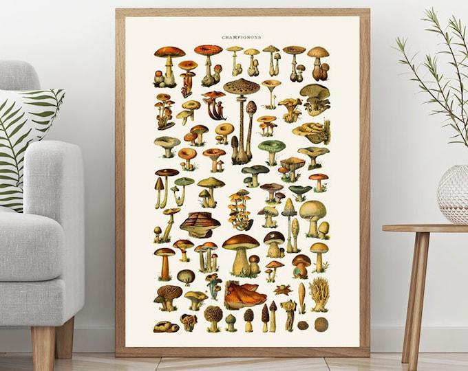 Mushroom Illustration Wall Art Mushroom Decor Mushroom Hand Drawn Illustration from old Botanical Plate Botanical Art Chef Gift WBOT79