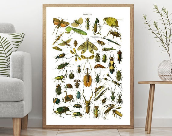 Vintage Illustration Plate of Insects from Old Natural History Book Illustration Insect Poster Insect Decor Insect Print Insect Art WBOT80