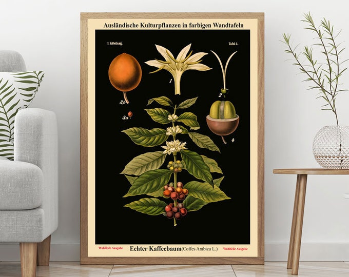 Old Educational Chart German Botanical Chart School Chart Black Botanical background Rare Botanical Prints Restored Charts Coffee WBLBOT1
