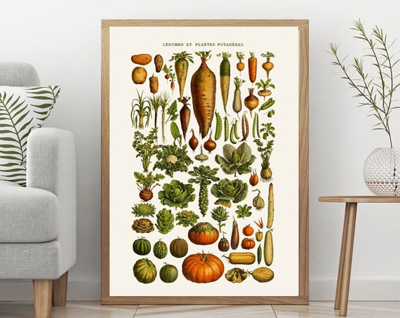 Vegetable Botanical Illustration Plate Botanical Wall Art for Kitchen Cooking Wall Art Cooking Decor Vegetable Decor Gift for Cook WBOT77