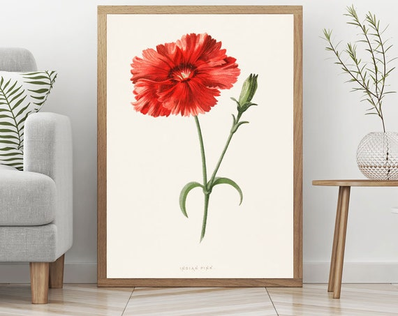 Red Flower Wall Art Red Flower Botanical Art Kitchen Botanical Art Kitchen Poster Red Decor Red Poster Indian Pink Flower Illustration