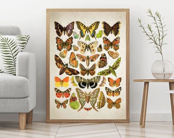 Botanical Butterfly Illustrations Butterfly Prints Butterfly Poster Vintage Butterfly Botanical Drawing Butterfly Art Butterfly Decor WBOT14