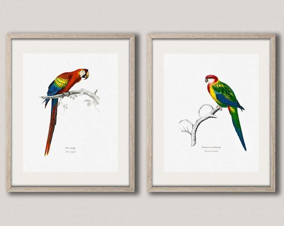 Bird Prints Set of 2 Bird Prints Bird Illustrations Exotic Bird Prints Bird Wall Art Bird Art Bird Decor Tropical Bird Art WBIRD2-WBIRD3