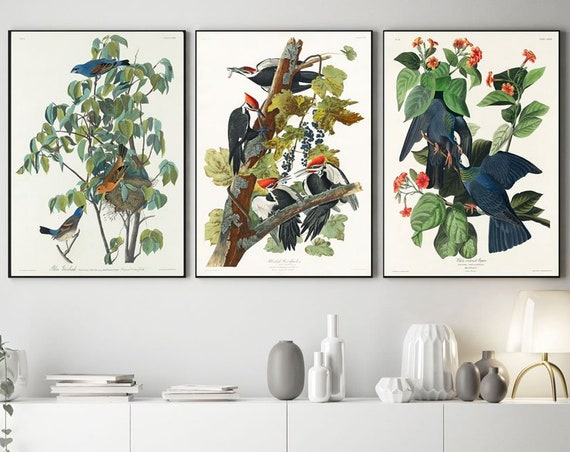 Audubon Birds of America Prints - Set of 3 Audubon Posters - Audubon Wall Art - Audubon Art AUD1-7-10