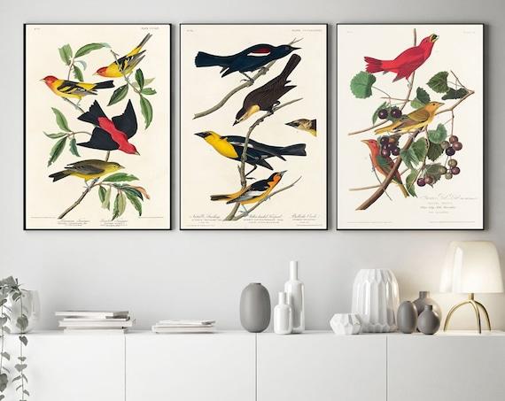 Audubon Prints Set of 3 Audubon Botanical Illustrations Bird Botanical Prints AUD5-6-9