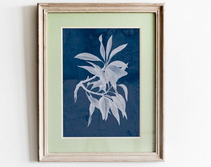 Anna Atkins Cyanotype Wall Art Navy and White Decor Blue and White Art Cyan Poster Cyan Print Cyan Decor Vintage Photography Botanical Blue