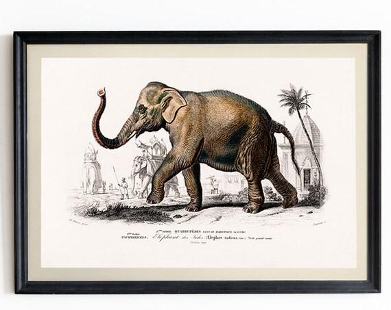Elephant Print Vintage Elephant Poster Elephant Decor Elephant Wall Art Elephant Art Print Elephant 19th Century Illustration WBA