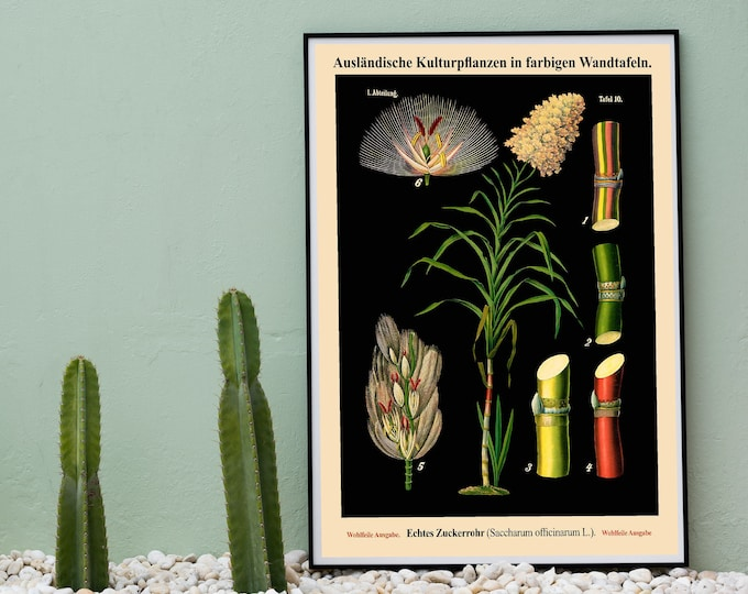 Sugarcane Botanical Art - Sugarcane Decor - Sugarcane Botanical Decor WBBLOT38