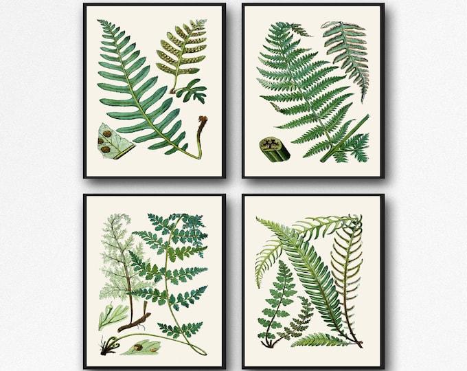 Fern Print Set of Fern Botanical Prints 4 Fern Posters Botanical Wall Art Fern Illustration Decor Fern Decor Fern Wall Art Botanical Sketchs