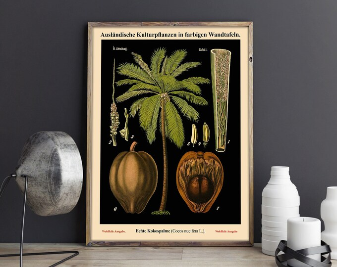 Botanical Palm Tree Print - Vintage Educational Chart - Vintage Botanical Decor - Oversize Botanical Art WBBOT28