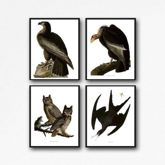 Audubon Bird Prints James John Audubon Birds of America Poster Set of 4 Bird Print Bird Wall Art Bird Illustration Kitchen Decor Natural Art