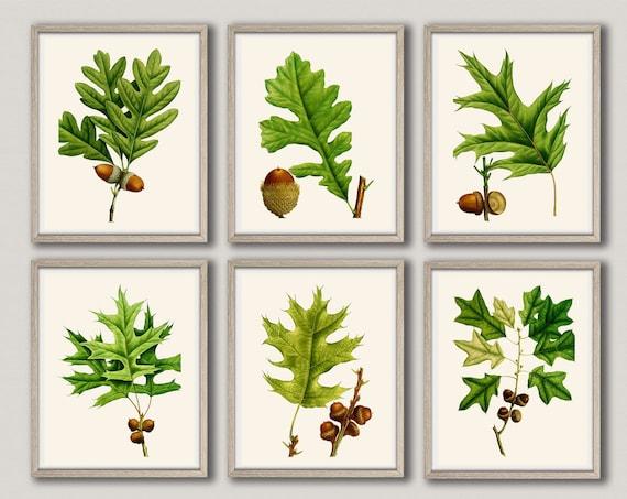 Tree Leaf Botanical Art Kitchen Wall Art Set of 6 Botanical Prints Acorn Print Acorn Wall Art Botanical Poster Set of 6 Decor WBOT44-WBOT49