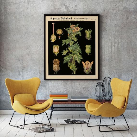 Vintage Botanical Chart German Educational Chart from 1800's Botanical Chart Rare Botanical Print Botanical Poster Large Botanical WBBLBOT2