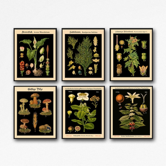 Set of 6 Botanical Prints Botanical Poster Set of Kitchen Prints Living Room Decor Botanical Decor Rare Botanical Prints wb-blot1-blot6-F6