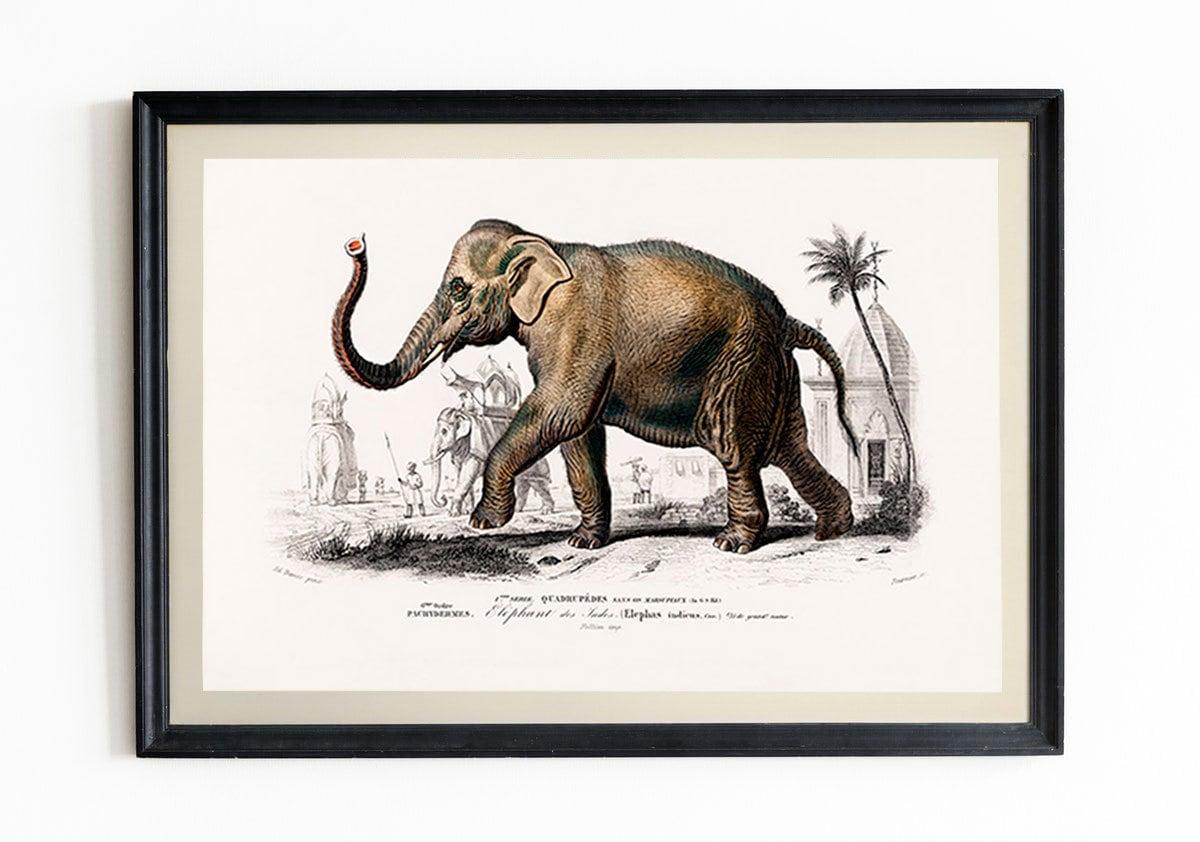 Elephant Print Vintage Elephant Poster Elephant Decor