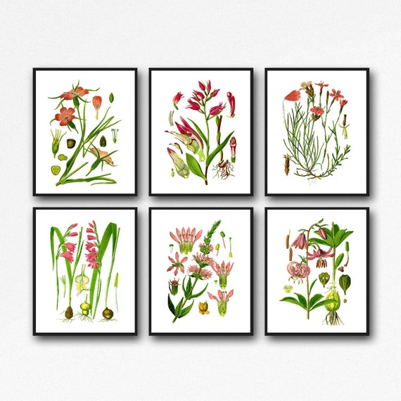 Red Botanical Prints Set of 6 Flower Prints WBOT127-132
