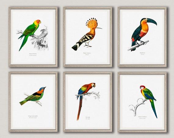 Bird Prints Set of 6 Bird Illustration Prints Bird Posters Bird Wall Art Scientific Drawings of Birds Toucan Print Exotic Bird WBBLOT7-8
