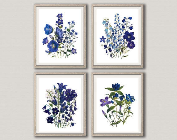 Blue Flower Botanical Drawings Botanical Illustration Set of 4 Botanical Prints Botanical Wall Art Botanical Posters WBOT103-WBOT106
