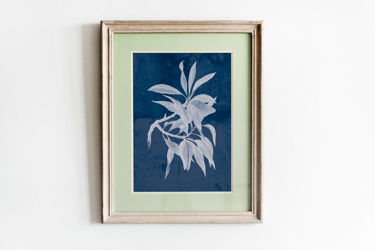 Anna Atkins Cyanotype Wall Art Navy And White Decor Blue And
