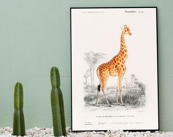 Giraffe Illustration Giraffe Decor Giraffe Print 1846