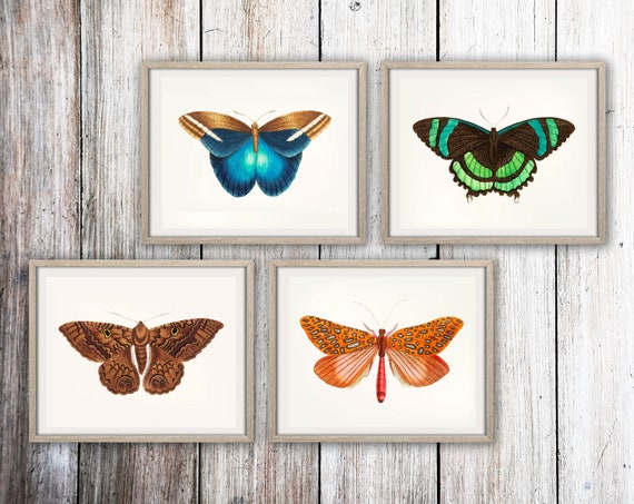 Butterfly Print Set of 4 Butterfly Illustrations Great Occidental Butterfly Venus Moth Green Banded Tail Butterfly Sable Moth - WBBUT-4F