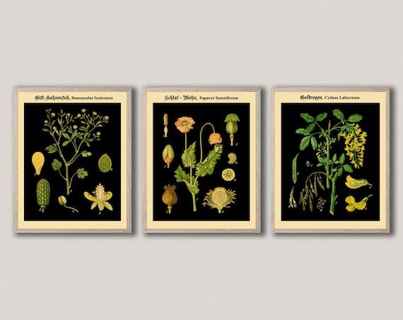Unique Vintage Set of 3 German Botanical Prints on Black Background German Botanical Art  Deutsch Botanisch WBBLOT10-11-12