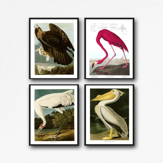 Audubon Bird Print Set of 4 Bird Illustrations by James John Audubon Wall Art Audubon Poster Wildlife Print Botanical Print Bird Paintings