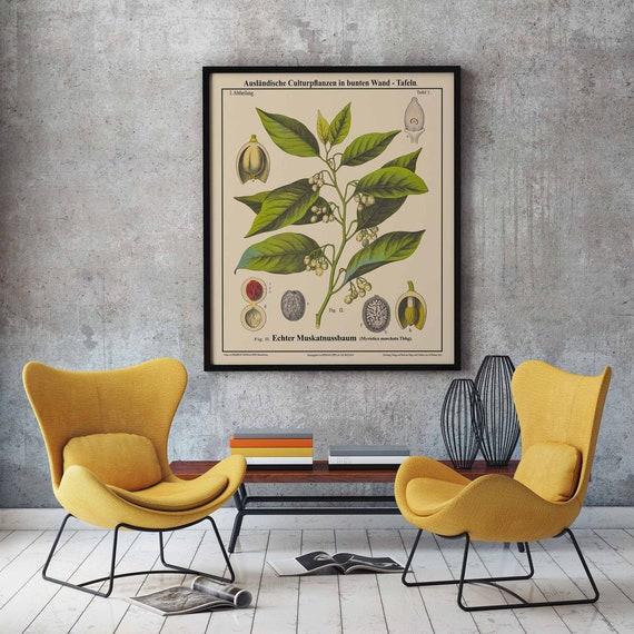 Nutmeg Botanical Print Nutmeg Decor Nutmeg Print