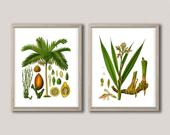 Botanical Poster Set of 2 Green Botanical Prints Green Art Medicinal Plants Kohler Botanical Art German Botanical Posters Planters WBOT55-58
