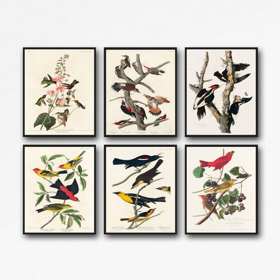 Audubon Prints - Audubon Illustration - Audubon Decor - Set of Audubon Posters AUD2-9